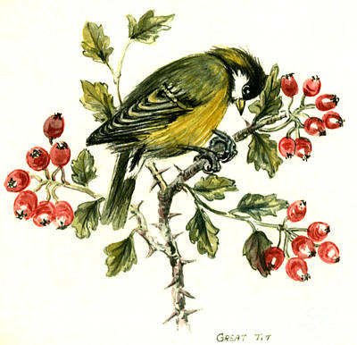 Tits Drawing - Great Tit On Hawthorn by Nell Hill
