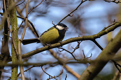 Photograph - Great Tit Woods by Matt Malloy