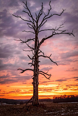 Photograph - Great Tree At Sunset by Wayne King