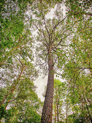 Photograph - Great Tree by Charles McKelroy