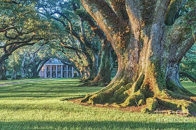 Plantations Photograph - Great Trees Of Oak Alley by Tod and Cynthia Grubbs