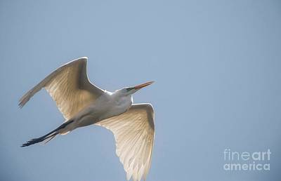 Art Print featuring the photograph Great White Egret - 2 by David Bearden