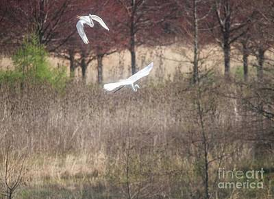 Art Print featuring the photograph Great White Egret - 3 by David Bearden