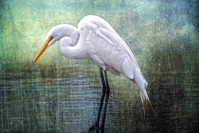 Great White Egret Art Print by Bonnie Barry