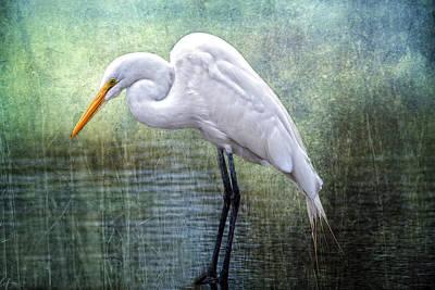 Great White Egret Original by Bonnie Barry