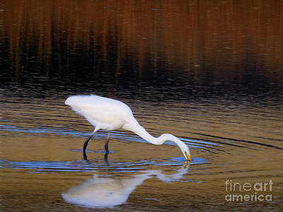 Photograph - Great White Egret I by Scott Cameron