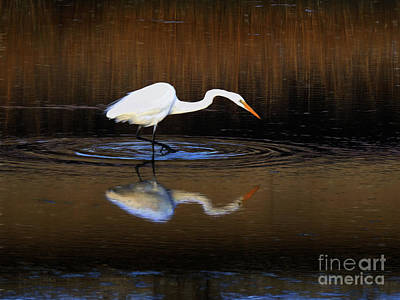 Photograph - Great White Egret IIi by Scott Cameron