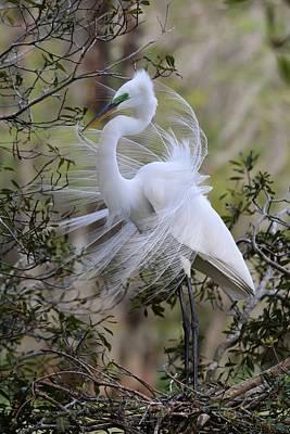 Great Egret Photograph - Great White Egret Iv by Carol R Montoya