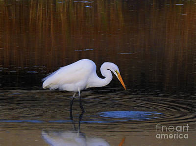 Photograph - Great White Egret Iv by Scott Cameron