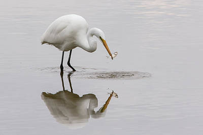 Photograph - Great White Egret by Linda Shannon Morgan