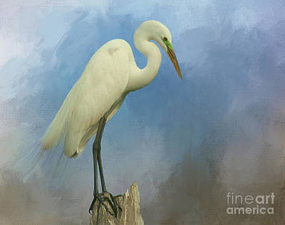 Photograph - Great White Egret On Watch by Myrna Bradshaw