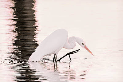 Photograph - Great White Egret Pink Sunset by Jennie Marie Schell