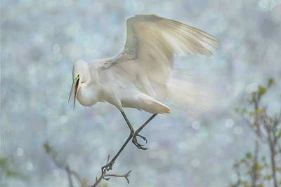 Photograph - Great White Egret - Sky Dancer #1 by Patti Deters