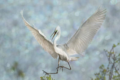 Photograph - Great White Egret - Sky Dancer #3 by Patti Deters