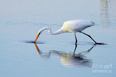 Yellow Orange Photograph - Great White Egret - The Catch by Scott Cameron