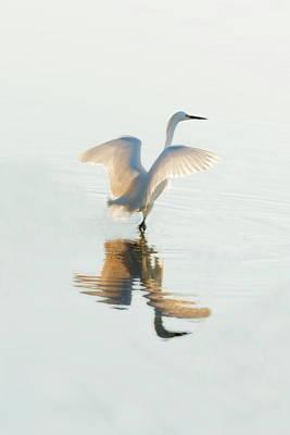 Photograph - Snowy Egret Wading In Water by Dan Friend