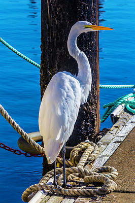 Egret Photograph - Great White Heron by Garry Gay