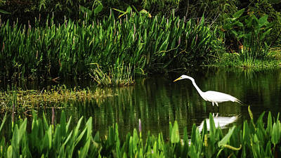 Photograph - Great White Heron Green Cay Wetlands by Lawrence S Richardson Jr