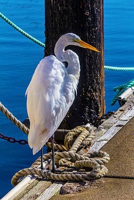 Great White Heron On Boat Dock Art Print