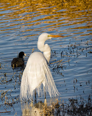 Photograph - Great White Heron On Rippling Water by Kathleen Bishop