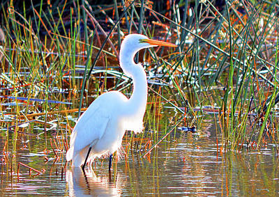 Bird Photograph - Great White Heron Up Close by Ken Figurski