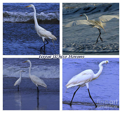 Photograph - Great White Herons Collage by Debby Pueschel