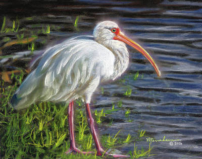 Pastel - Great White Ibis by Melissa Herrin