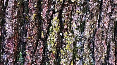 Photograph - Great White Oak Bark by John Wartman