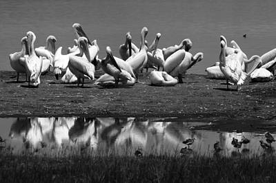 Photograph - Great White Pelicans, Lake Nakuru, Kenya by Aidan Moran