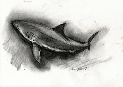 Painting - Great White Shark Drawing by Juan Bosco
