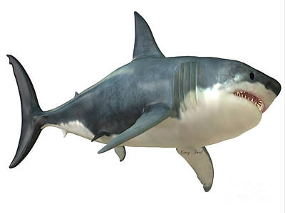 Food And Flowers Still Life Rights Managed Images - Great White Shark Female Royalty-Free Image by Corey Ford