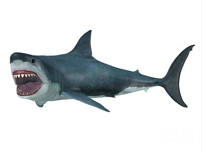 Great White Shark Left Turn Art Print by Corey Ford