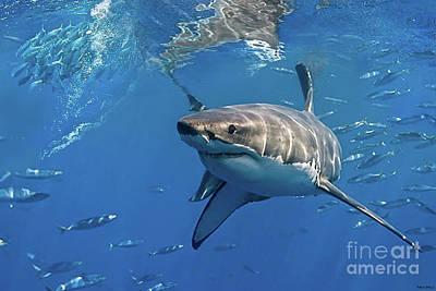 Van Goh Mixed Media - Great White Shark by Thomas Pollart