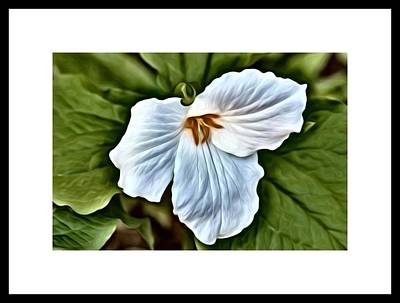 Photograph - Great White Trillium by Kimberly Woyak