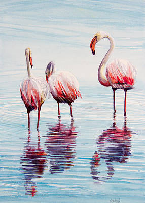 Greater Flamingos Painting - Greater Flamingo Trio by Dave Whited