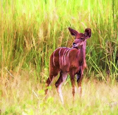 Digital Art - Greater Kudu Female by Liz Leyden