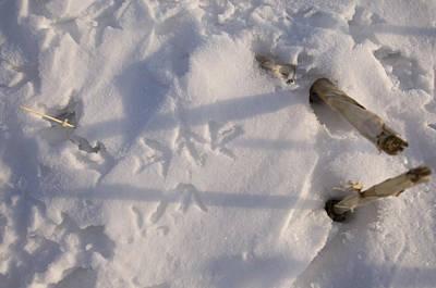 Greater Prairie Chicken Tracks Art Print