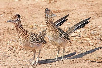 Photograph - Greater Roadrunner Bird by Jennie Marie Schell