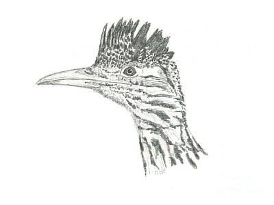 Drawing - Greater Roadrunner by Marcus England