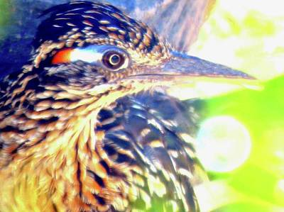 Greater Roadrunner Portrait 2 Art Print