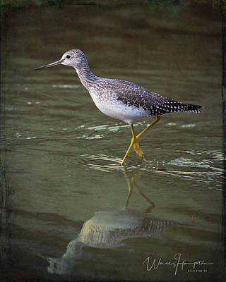 Photograph - Greater Yellowlegs - 4410,st by Wally Hampton