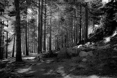 Photograph - Gredos Forest by Henri Irizarri