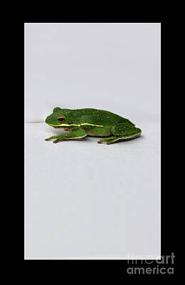 Photograph - Gree Tree Frog 2016 With Black Border by Karen Adams