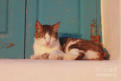 Photograph - Greece Cat On Blue Door by Donna Munro