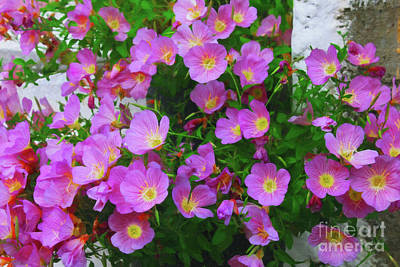 Digital Art - Greece Pink Flowers by Donna Munro