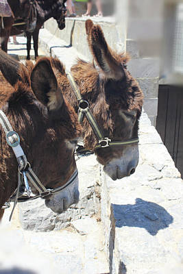 Photograph - Greece's Donkeys by Donna Munro