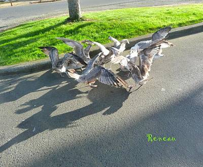 Photograph - Greedy Gulls by Sadie Reneau