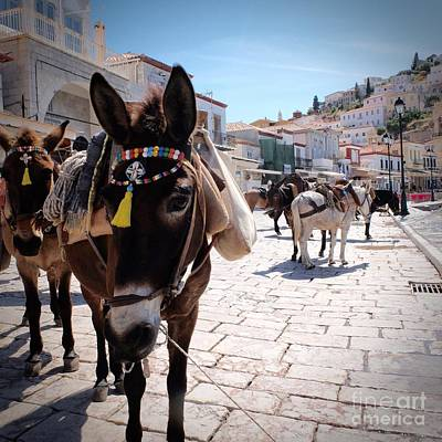 Photograph - Greek Donkey by Louise Fahy