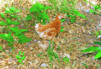 Digital Art - Greek Town Hen by Donna L Munro