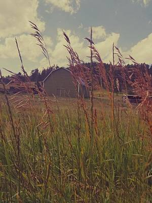 Photograph - Green Acres by Amanda Smith